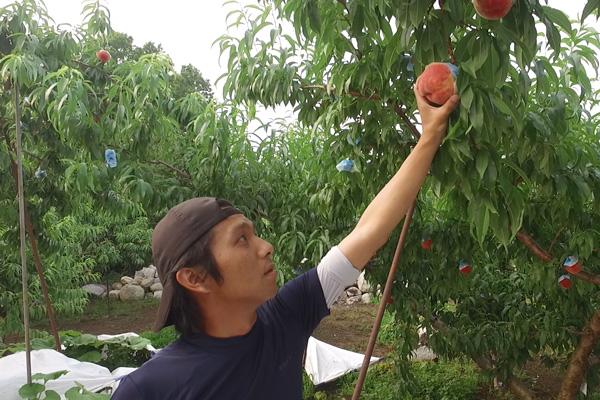 フルーツを新しいこだわりのカタチにする。3代目だからできる桃作りを発信します。
