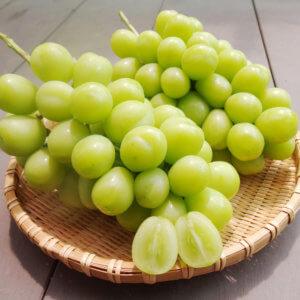 ぶどうの王様ピオーネの収穫が始まりました